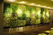Image for 'Videos about Biophilic design'