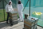 Image for 'Apiary Update'