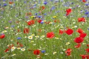 Image for 'Wildflower Meadow begins'